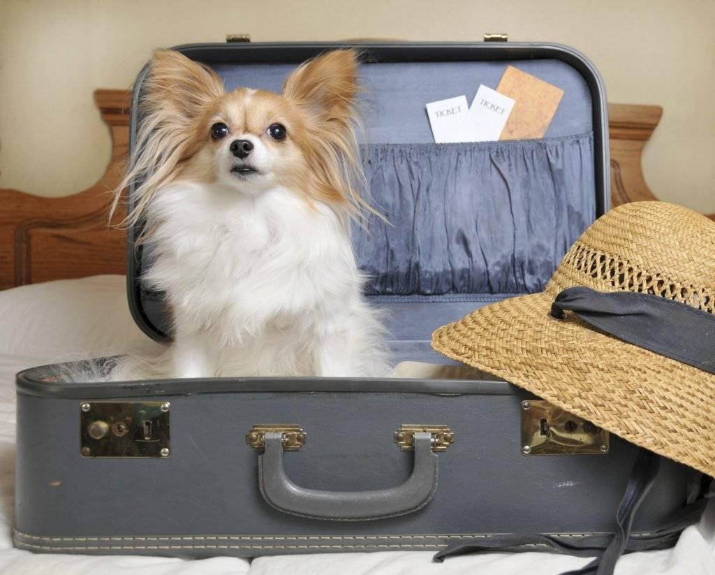 Что делать с животными и растениями, если вы собираетесь в отпуск? на supersadovnik.ru