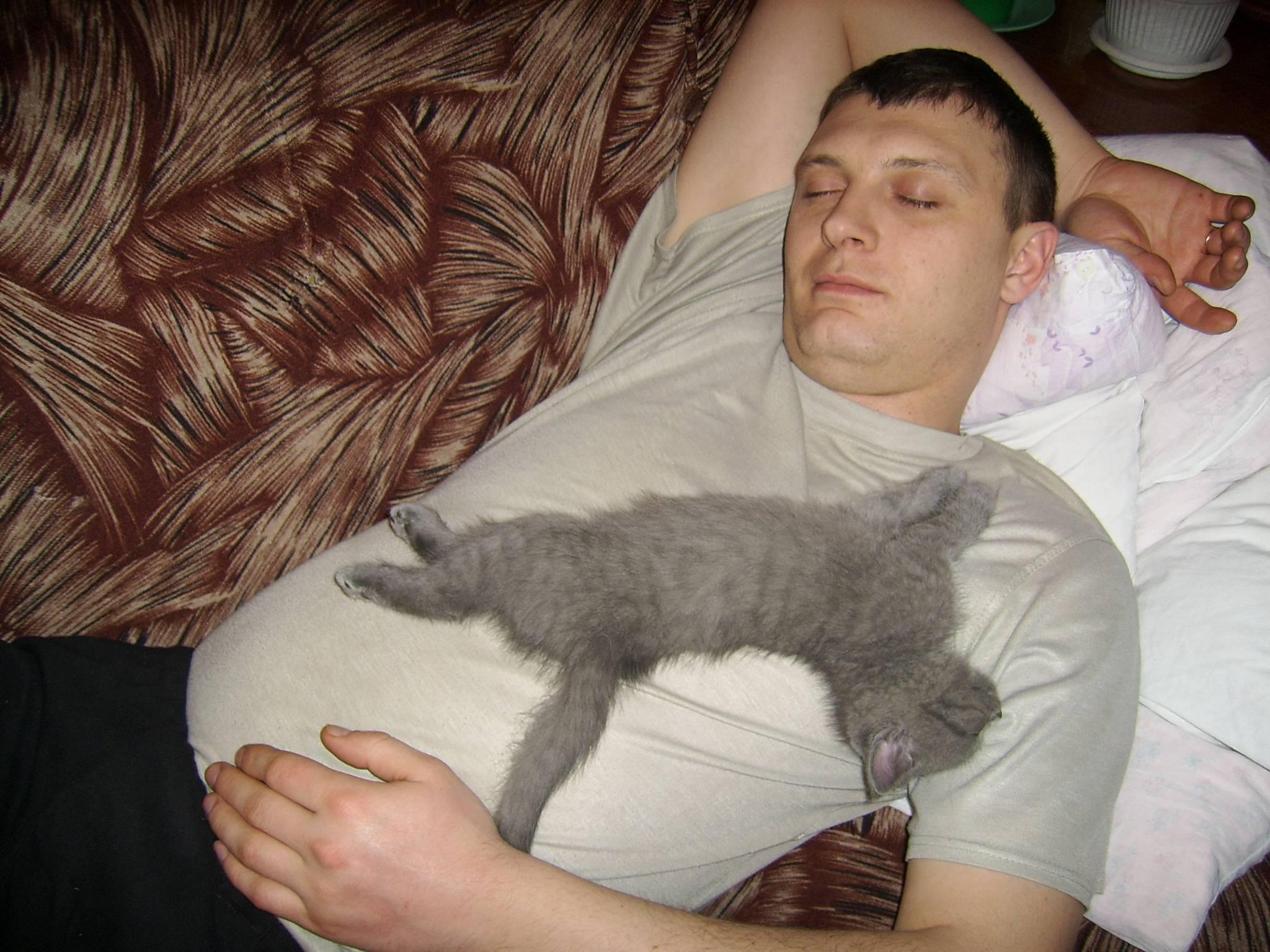 Почему кошки много спят | «зачем и почему»