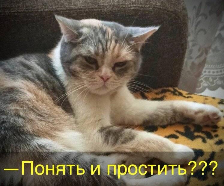 Влияние кошек на здоровье хозяев