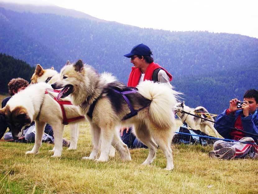 Гренландская собака, фото и описание породы: рассказываем по полочкам