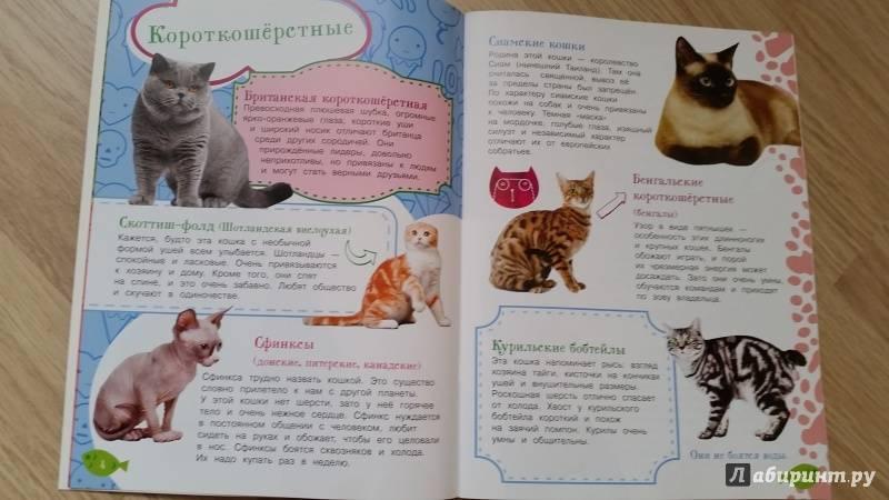 Как воспитывать котенка