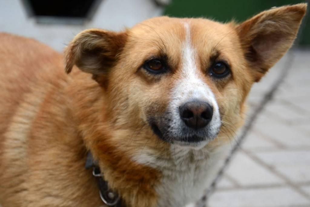 Клички для собак крупных пород: красивые и прикольные имена для больших собак-мальчиков и девочек