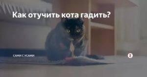 Почему кошка гадит на постель - причины у котят и взрослых особей, советы по пресечению и профилактике