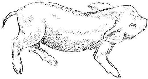 Инфекционные артриты (иа) собак диагностика и лечение
