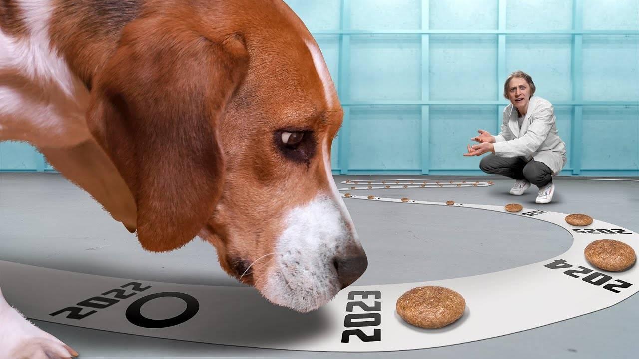 Как выбрать собаку. советы кинолога