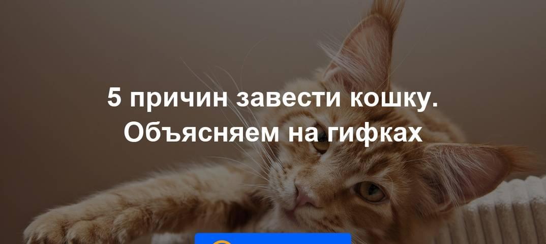 Нужна ли вторая кошка в доме? - mnogo-krolikov.ru