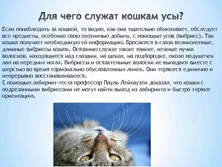 Зачем кошкам и котам усы: строение и нужные функции, научные факты и причины выпадения