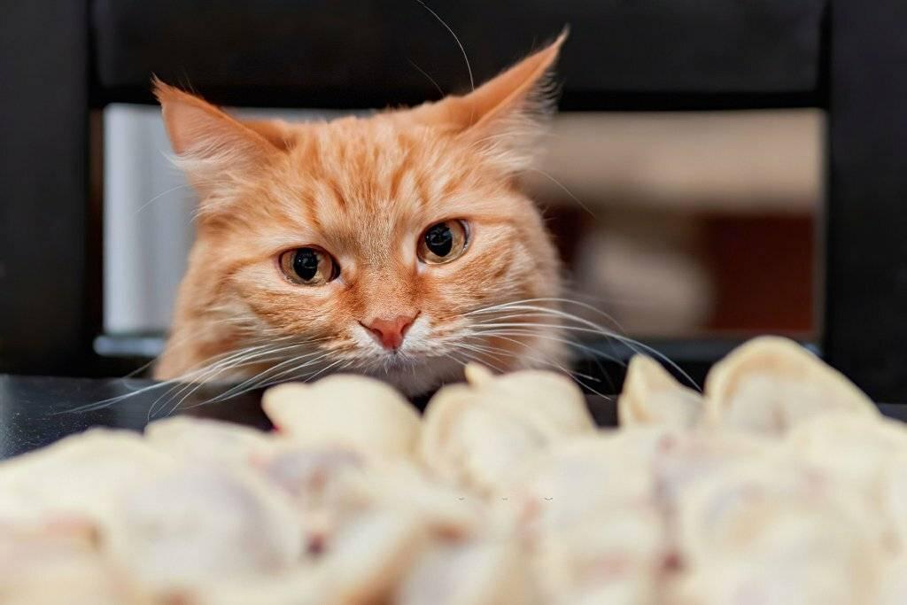 7 самых больших ошибок, которые владельцы кошек делают впервые — сайт эксперта по животным — howmeow