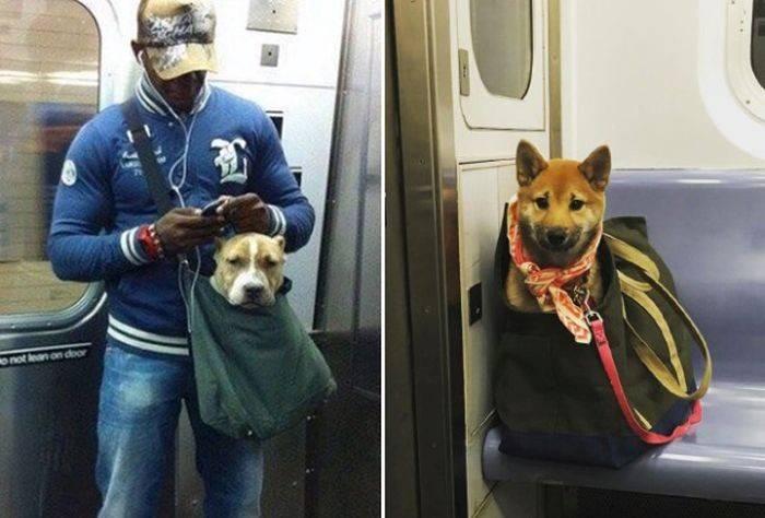 Как перевозить собаку в автобусе, чтобы никто не возражал