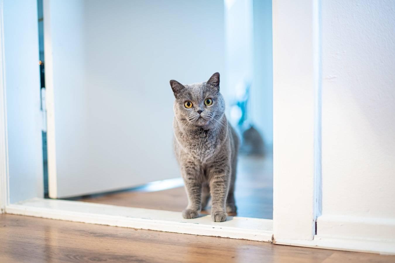 Почему и как мурлыкают кошки, мурчат и урчат коты