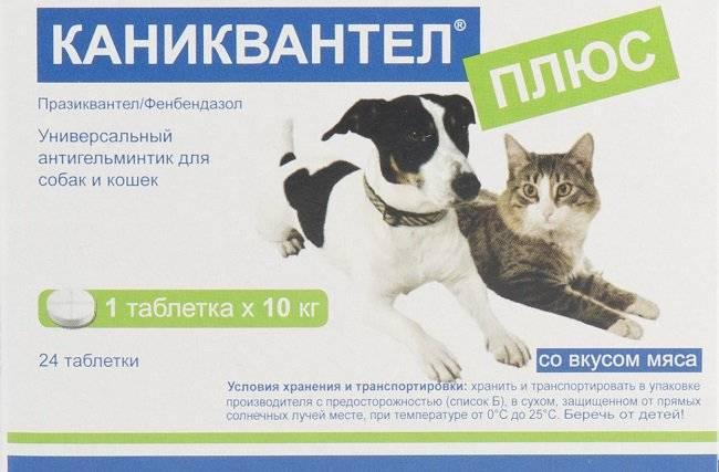 Caniquantel для кошек