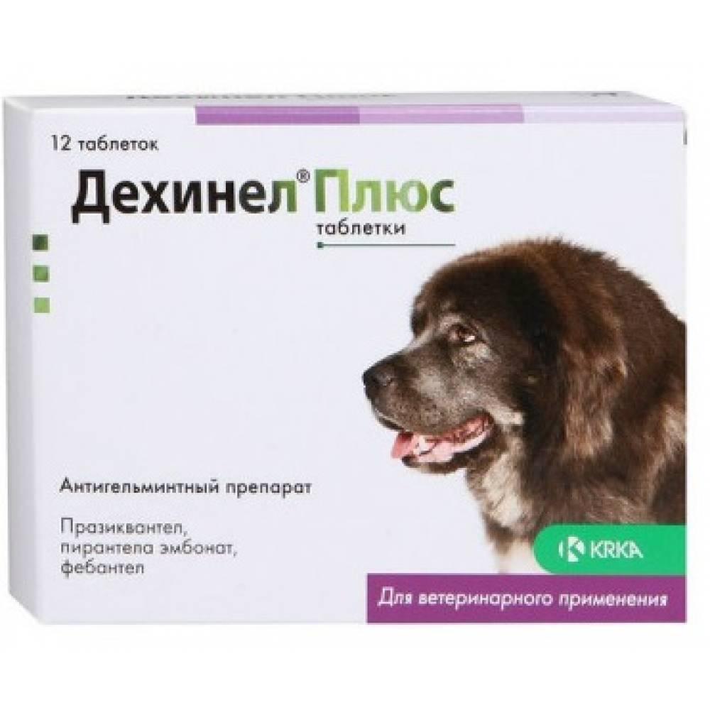 Дехинел плюс для собак – эффективный антигельминтный препарат