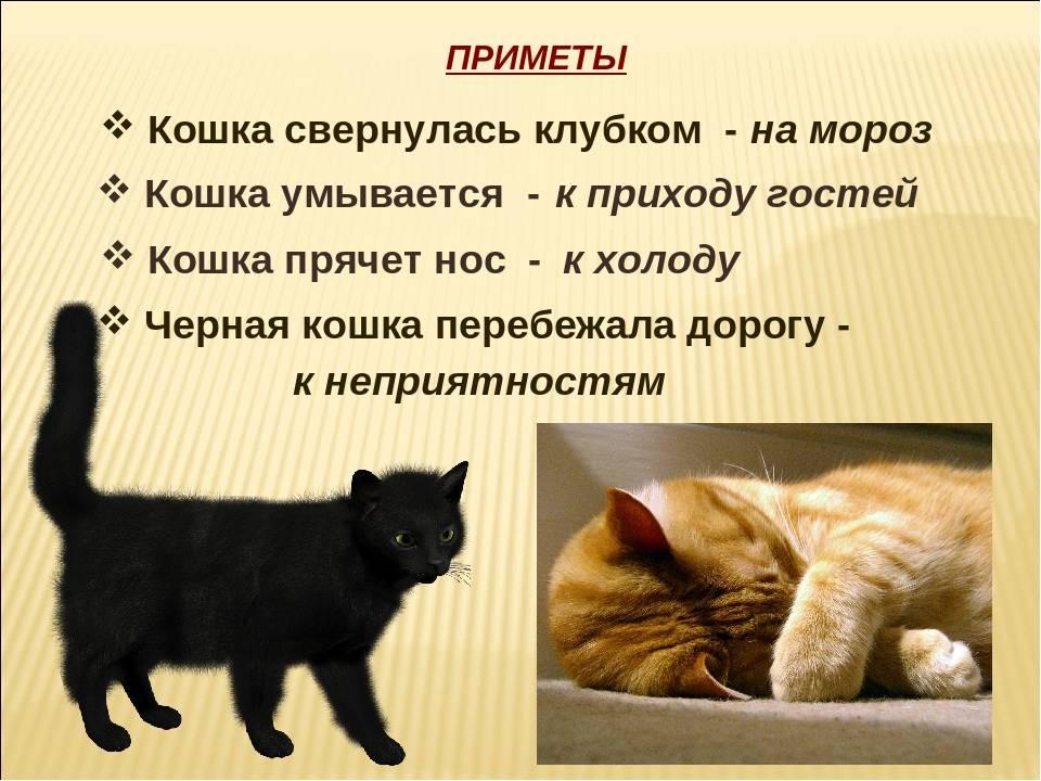 ᐉ на сколько дней можно оставлять кошку одну? - ➡ motildazoo.ru