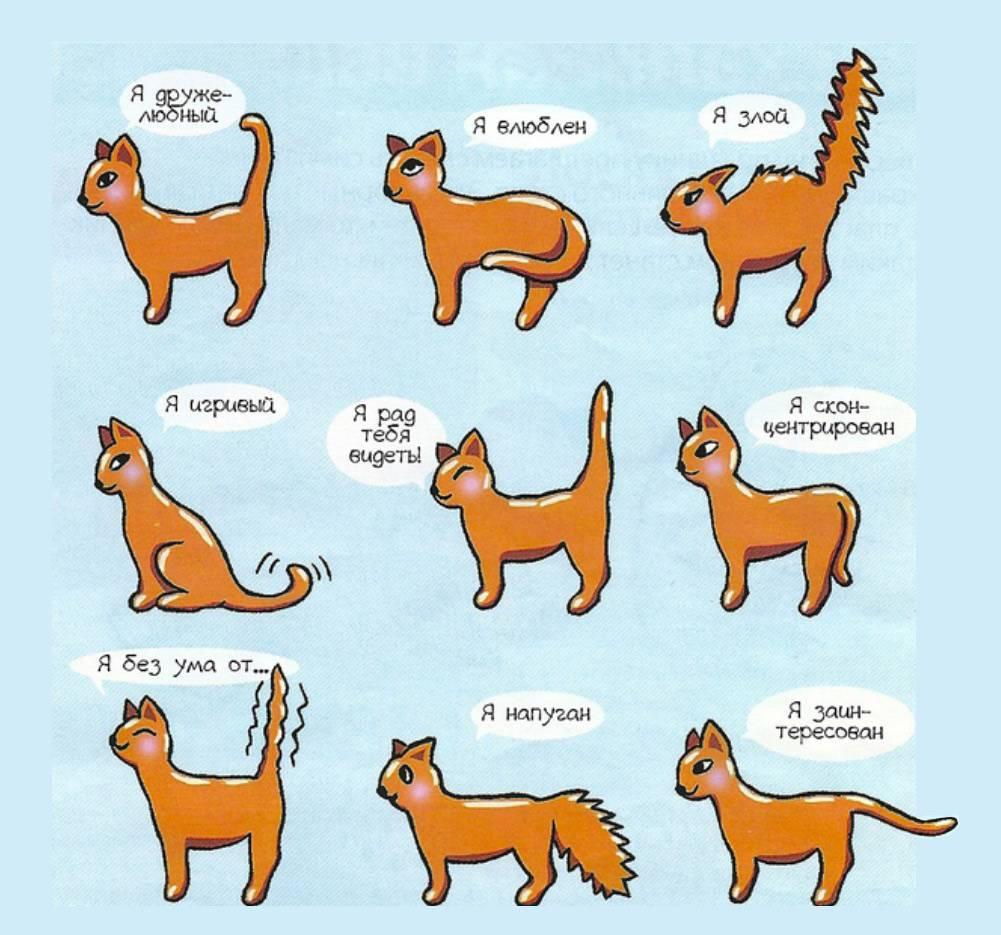 Мяу по‑русски: о чем говорят кошки » кошка ветра