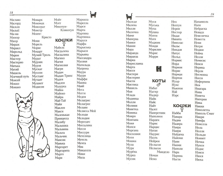 Имена | клички для кошек мальчиков и девочек. выбирай!