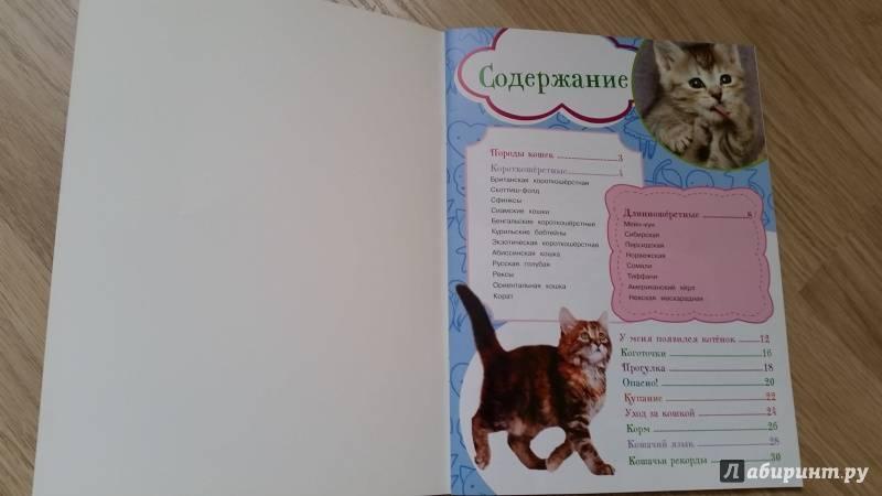 Воспитание котёнка в домашних условиях: правила и рекомендации