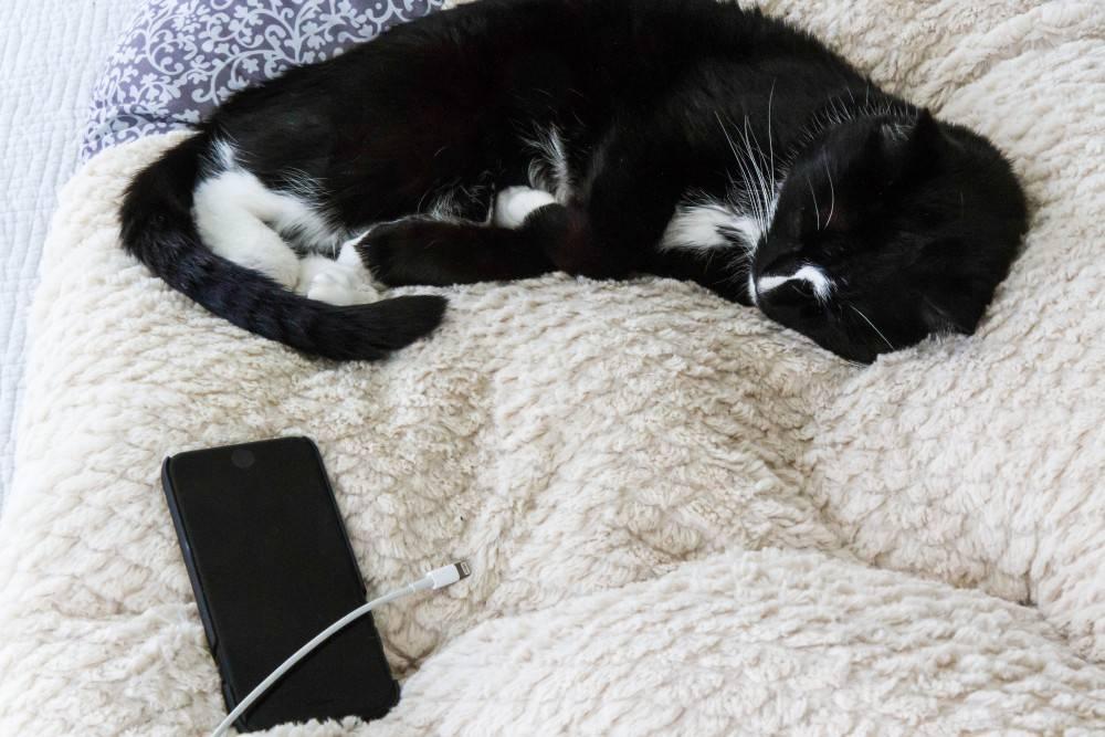 Почему кошки и коты гадят в постель