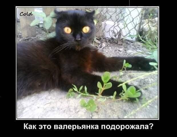 Почему коты и кошки любят валерьянку и какую реакцию она вызывает у животного?