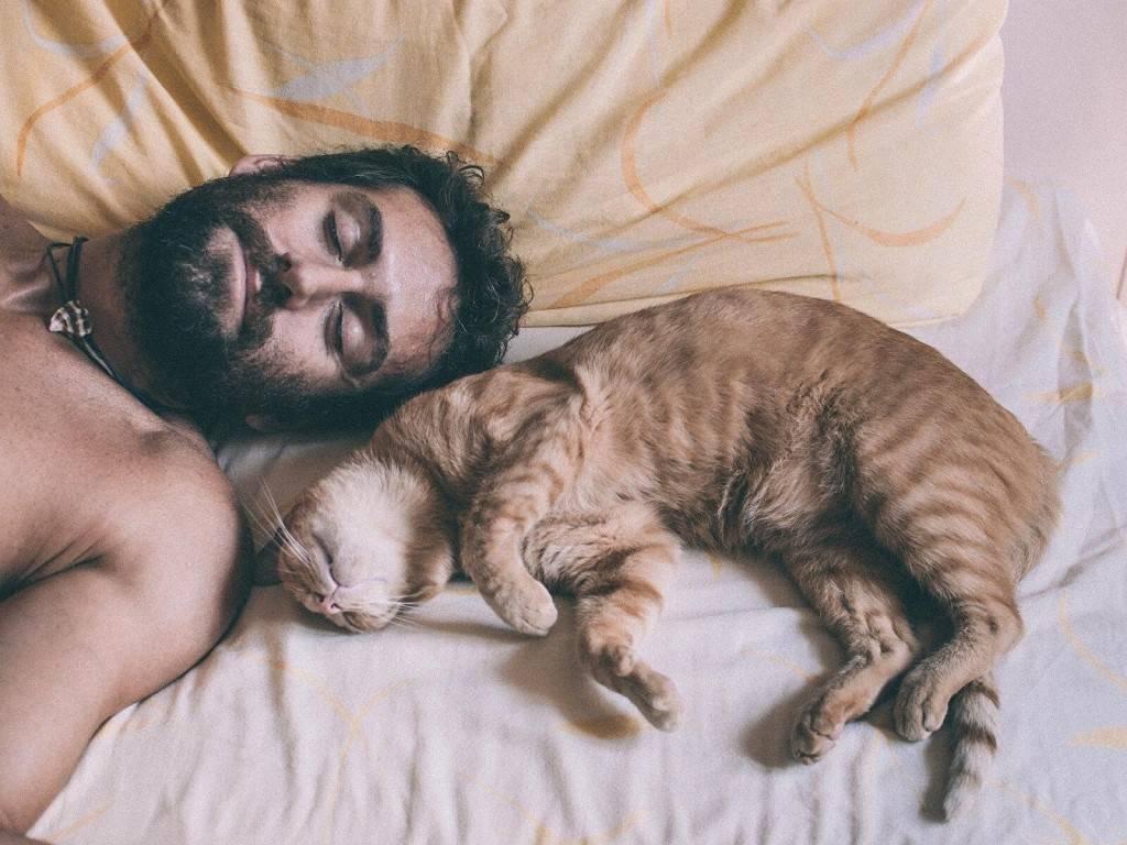 Плюсы и минусы совместного сна с кошкой