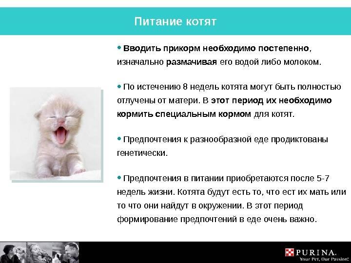 До какого возраста растут кошки домашние?