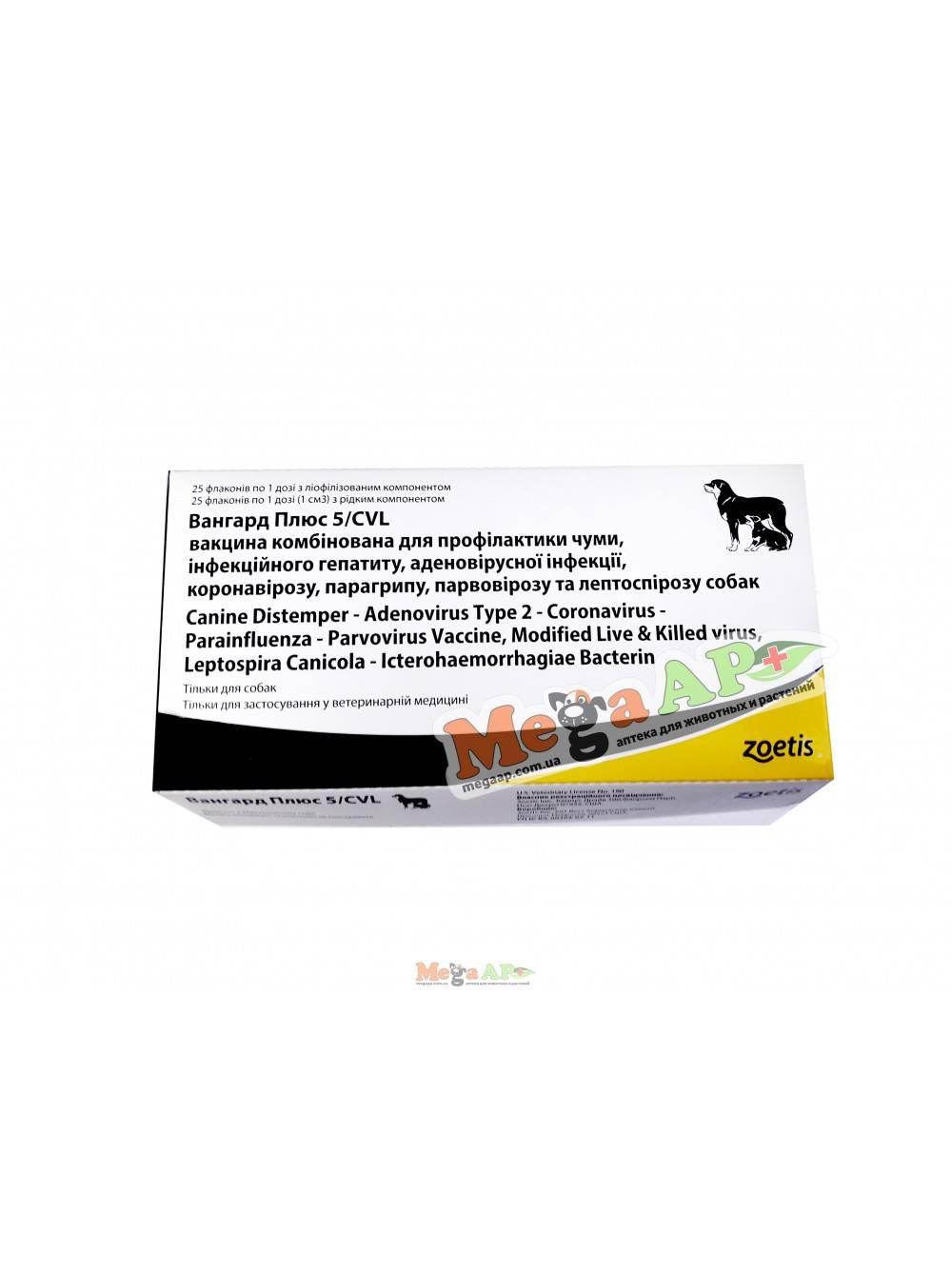 Прививка вангард для собак и щенков │ для прививок используется вангард 5 и 7