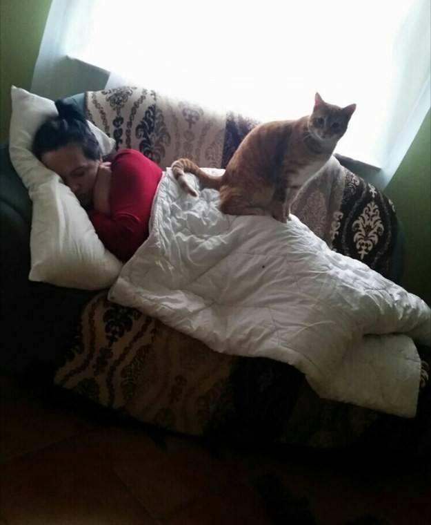 Почему кошка ложится на человека: причины поведения, зачем питомцы спят рядом с хозяином