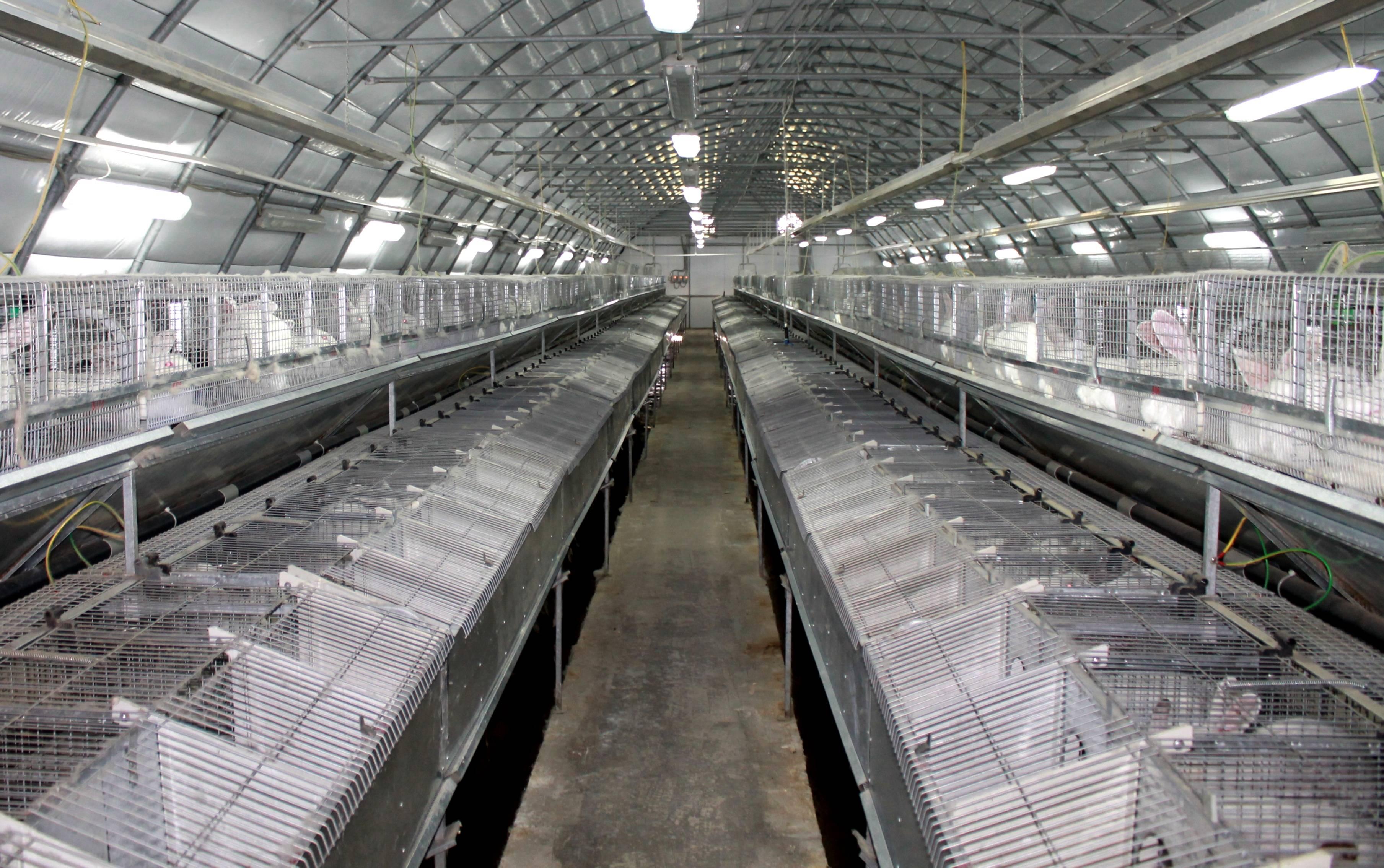 Кролиководство как бизнес: бизнес-план разведения животных