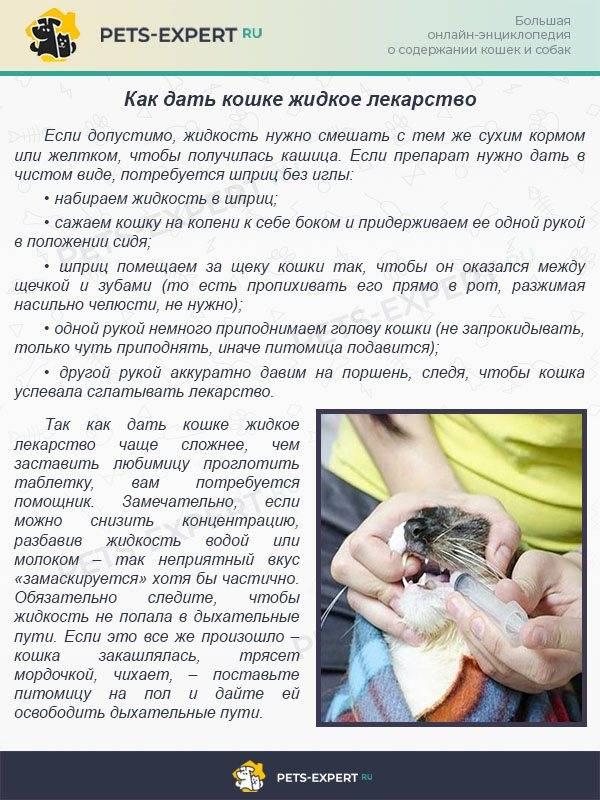 Как дать таблетку кошке: рекомендации ветеринаров, проверенные способы