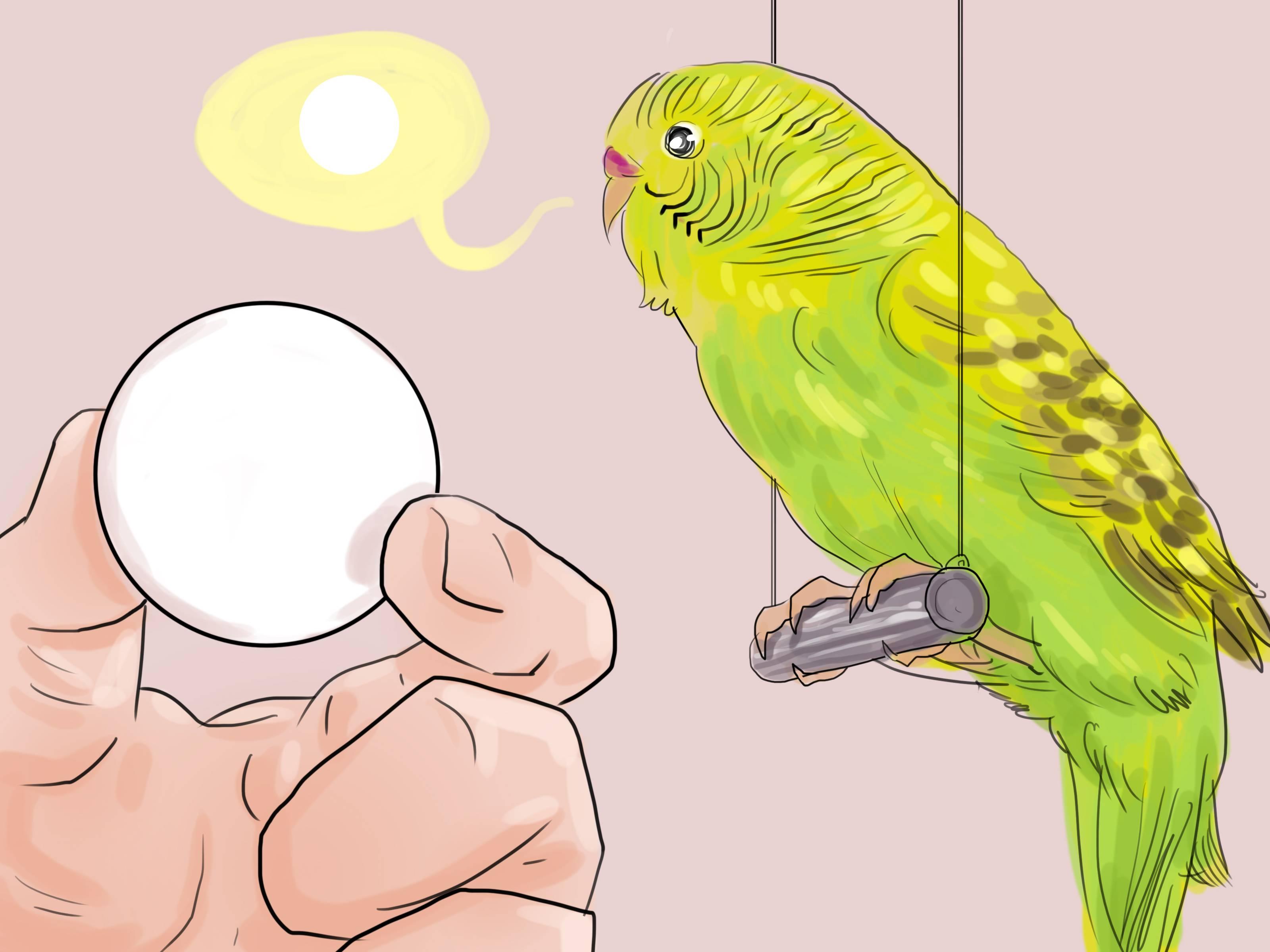 Как научить попугая разговаривать: советы и рекомендации