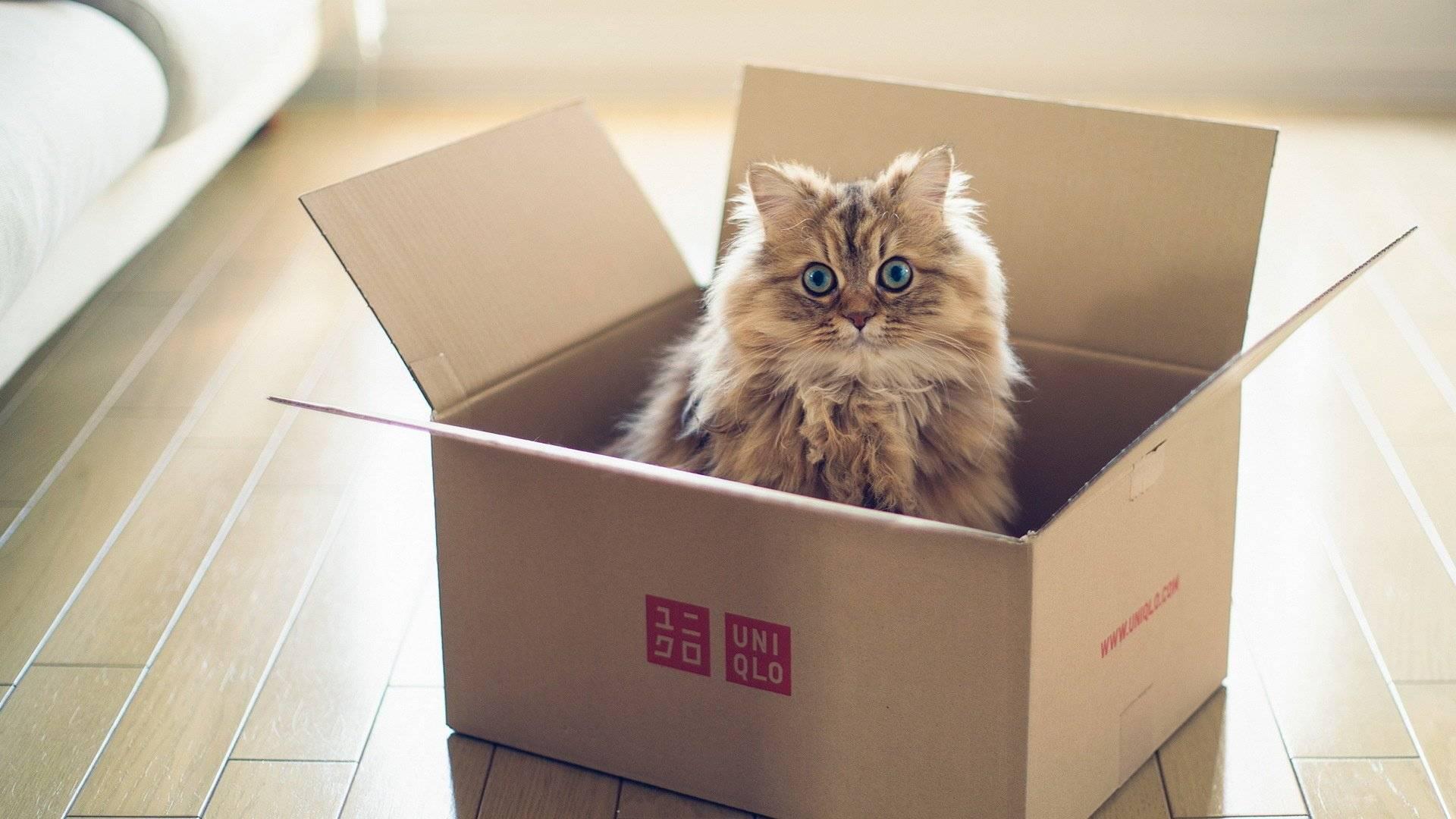 Почему кошки любят коробки, версии с точки зрения специалистов, видео