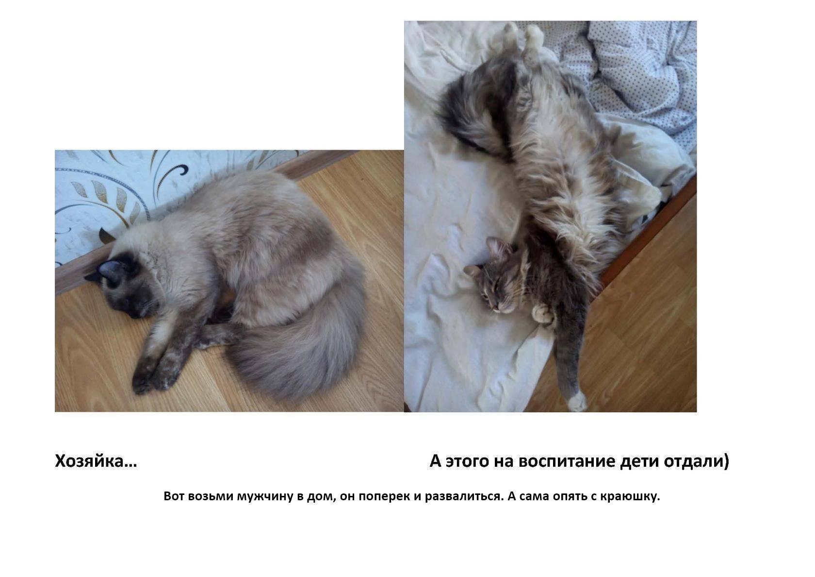 На сколько дней можно оставить кошку дома одну