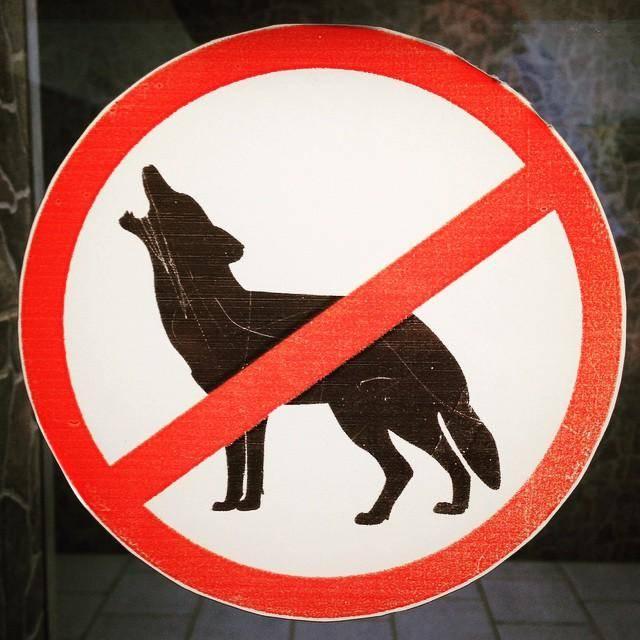 Места, в которые можно и нельзя ходить с собаками