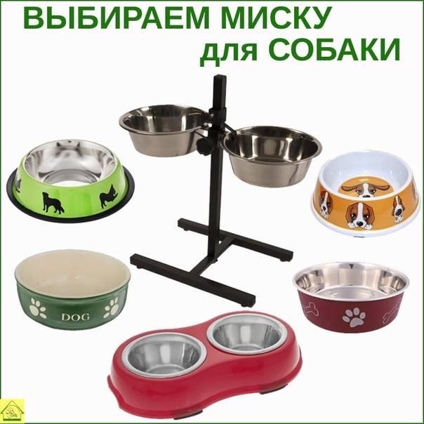 Миски для собаки: классификация изделий и рекомендации по выбору