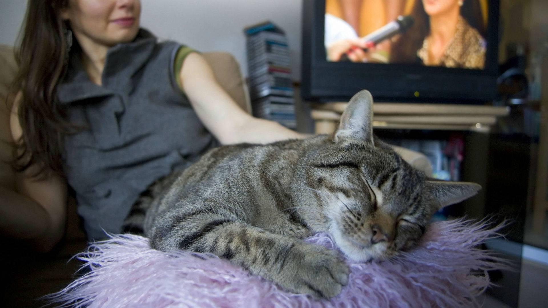 Анорексия у кота как лечить в домашних условиях
