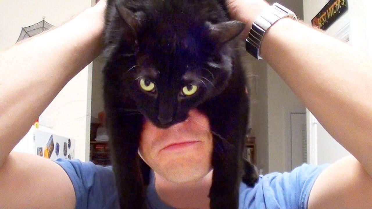 Кошачья логика или как мыслят кошки.