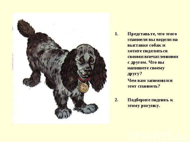 Русский охотничий спаниель: фото, описание, характер, содержание, отзывы