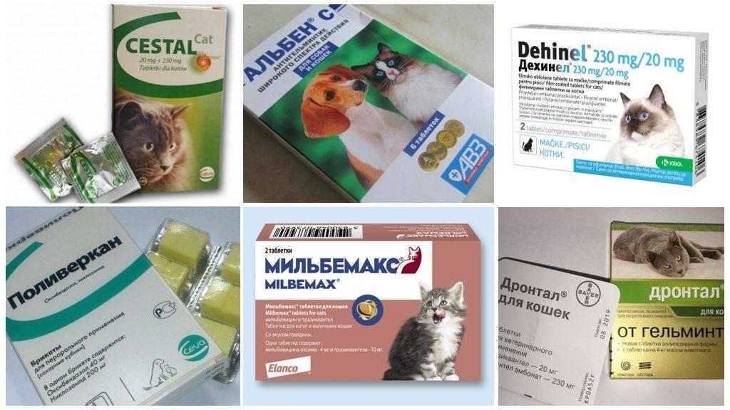 Дегельминтизация: когда, зачем и чем?   благотворительный фонд vet....