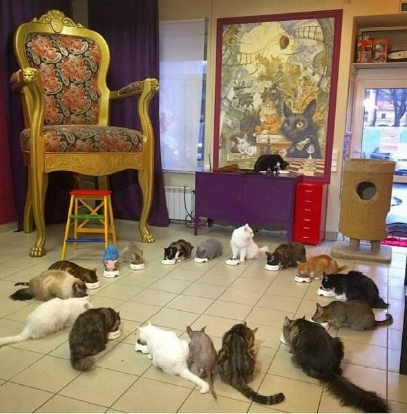 """Кафе """"республика кошек"""" в санкт-петербурге - фото, описание"""
