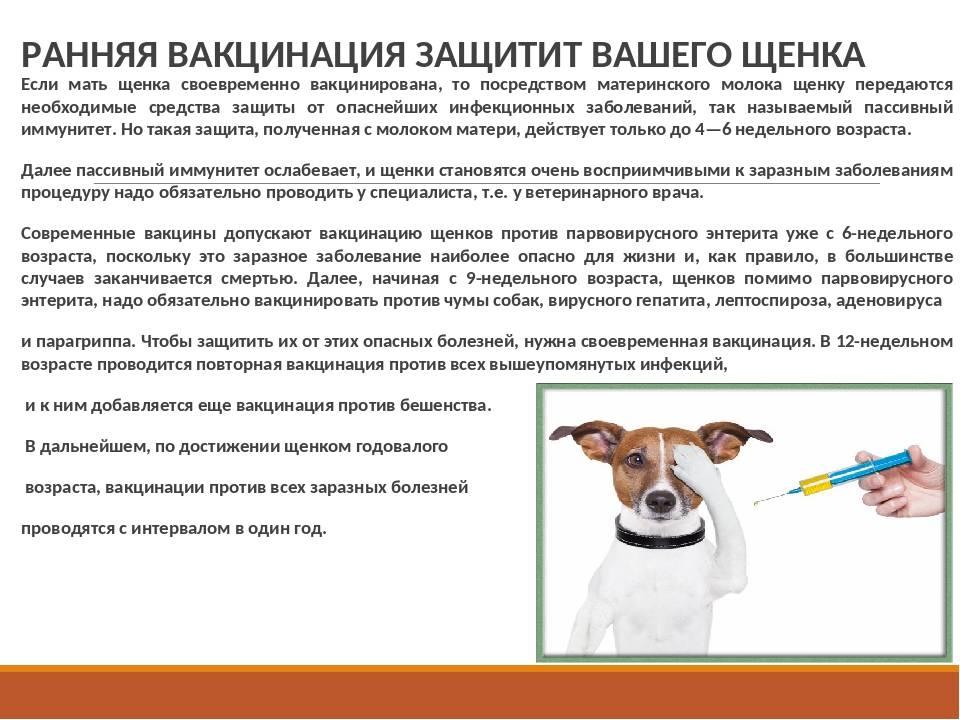 Как подготовить собаку к прививке
