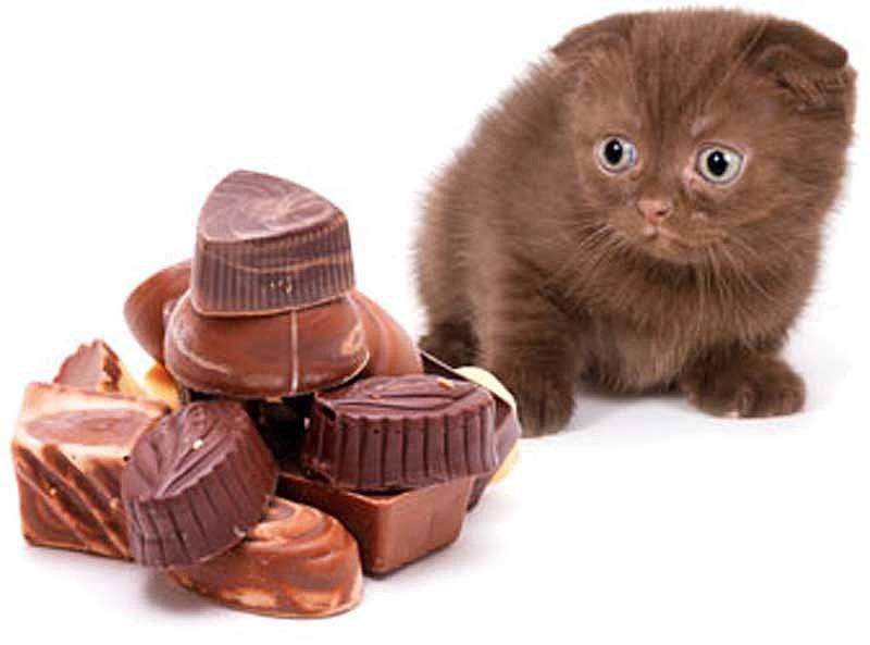 Можно ли котам сладкое и почему?