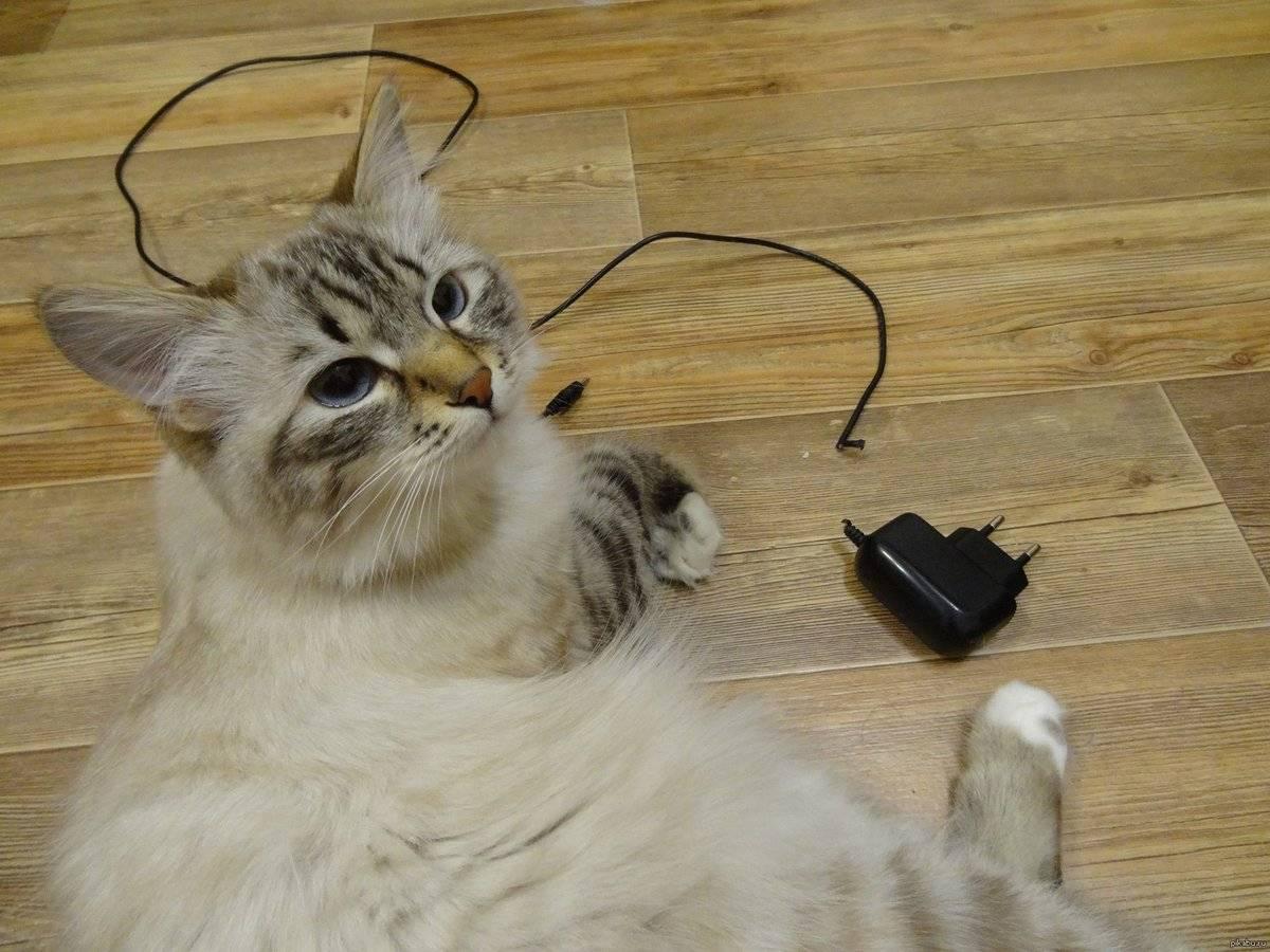 Как наказать кота: 5 «золотых правил» наказания