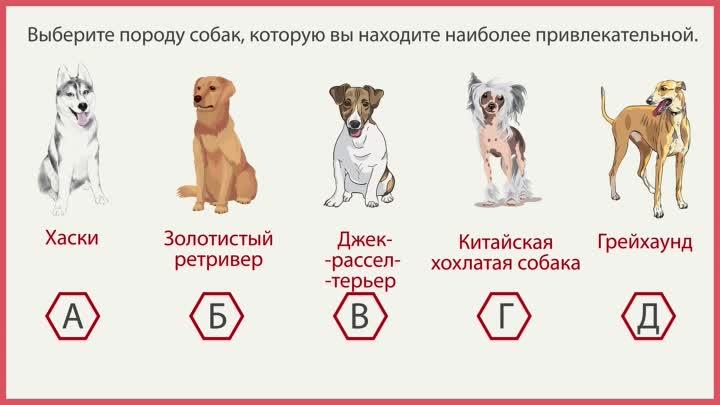 Какая порода собаки подходит по знаку зодиака
