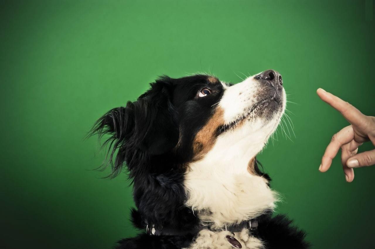 Насколько важно обучить щенка команде «фу» и как это сделать в домашних условиях? как научить щенка или взрослую собаку команде «фу»