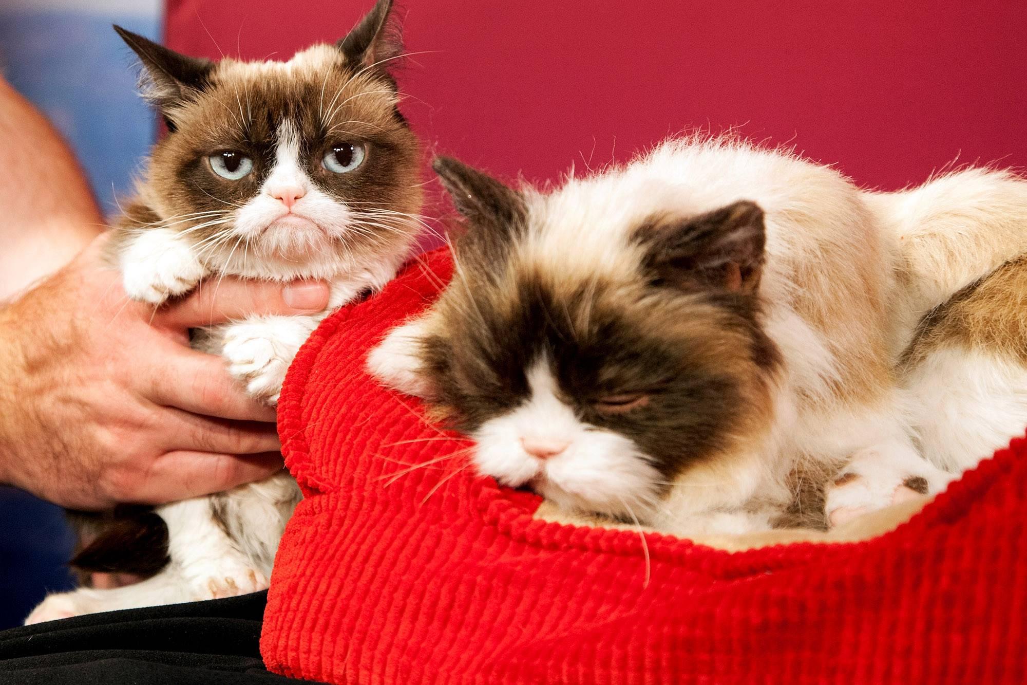Самые известные в мире коты, знаменитые и популярные кошки – звезды интернета