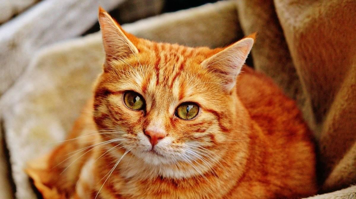 Чего боятся кошки и коты: почему питомцы не любят пылесосы и другие шумные предметы, способы борьбы со страхами