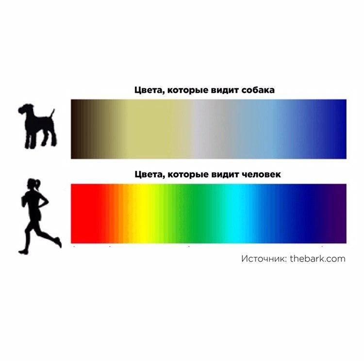 Как видят кошки и коты наш мир: какое у них зрение, различают ли животные цвета и другие особенности кошачьего зрительного мировосприятия