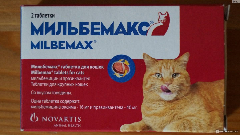 Обезболивающие для кошек (что нельзя давать)