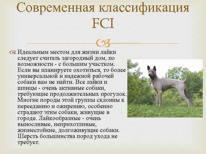 Классификация пород собак принятая в мкф (fci). группа 2