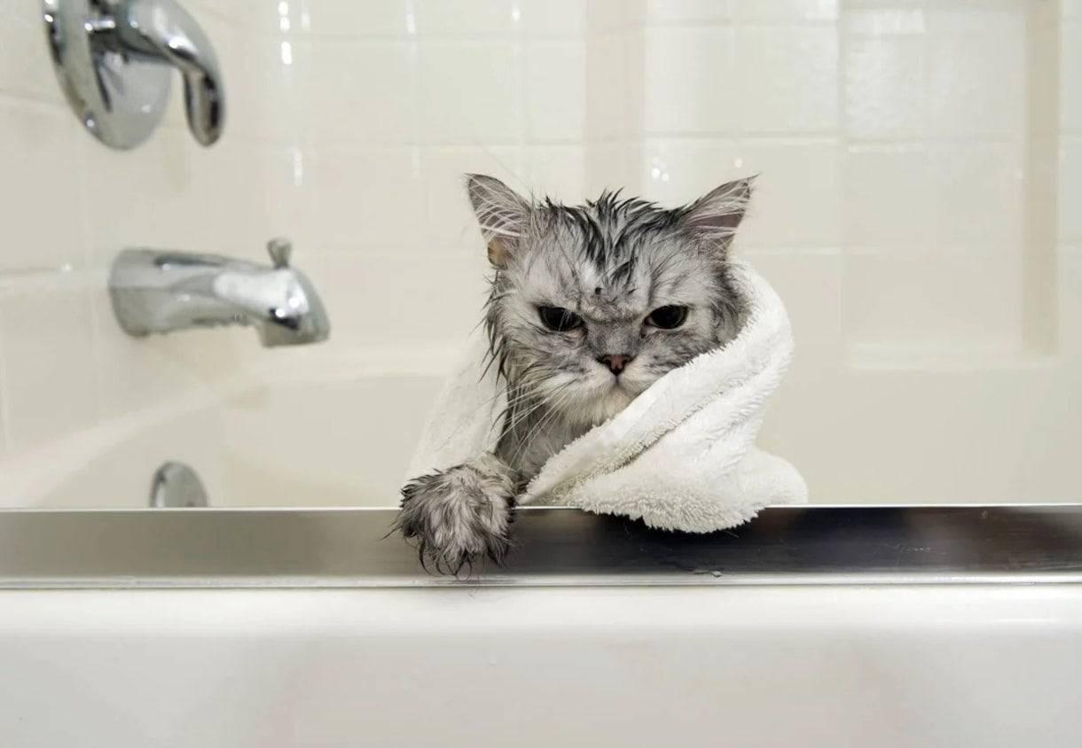 Почему коты боятся воды: научный взгляд на водобоязнь