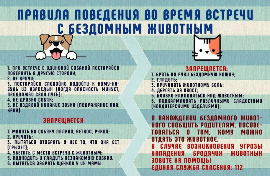 7 правил поведения адекватной и здоровой кошки - gafki.ru
